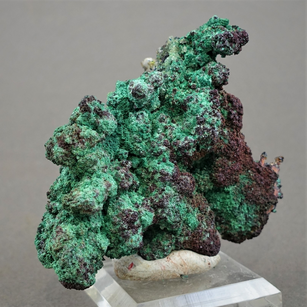 Native Copper & Cuprite & Malachite