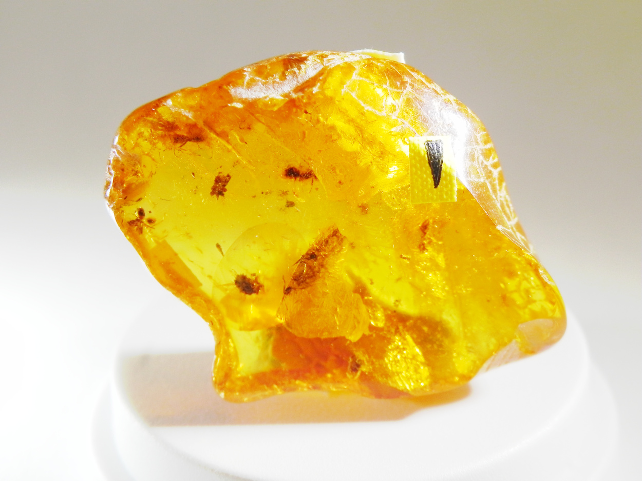 Amber With Inclusions