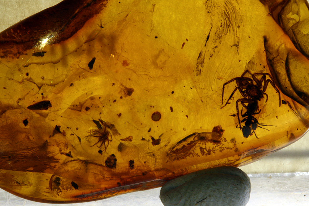Amber With Spider & Ant