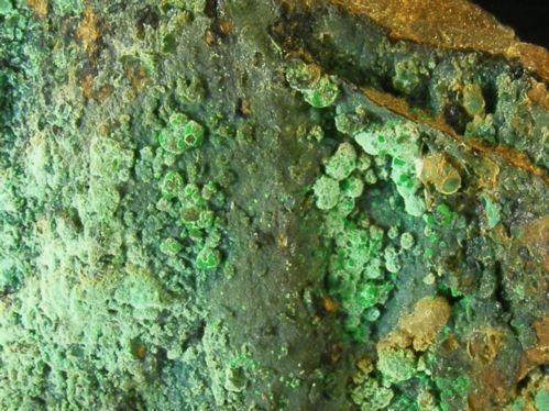 Agardite Conichalcite & Chrysocolla