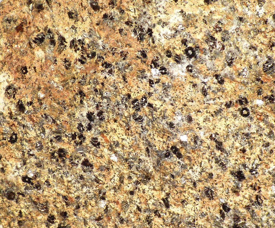 Biotite In Schist