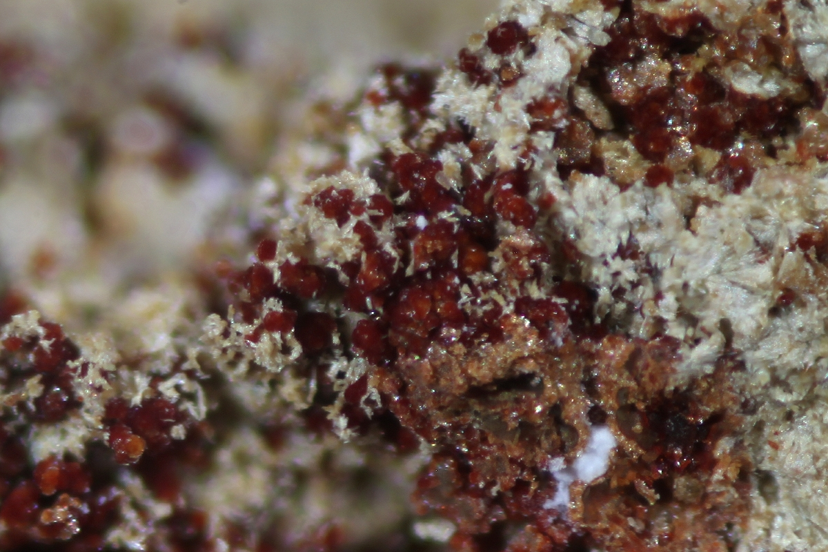 Cobaltarthurite & Arsenocrandallite