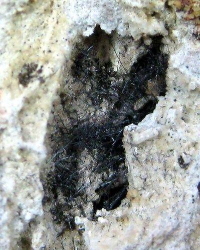 Vonsenite With Tridymite