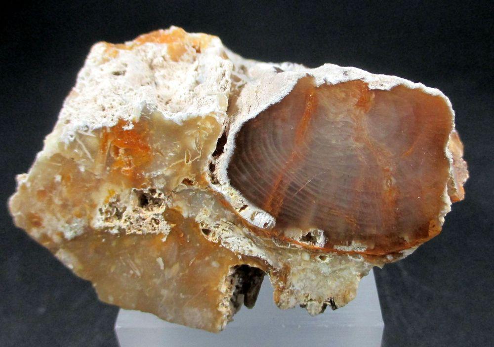 Opal Var Wood Opal