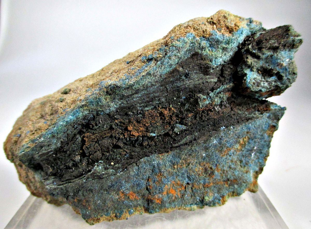 Uraninite In Thucholite With Azurite & Malachite Psm Fossil Wood