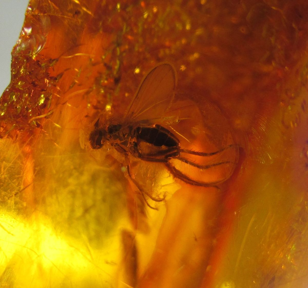Amber & Inclusions