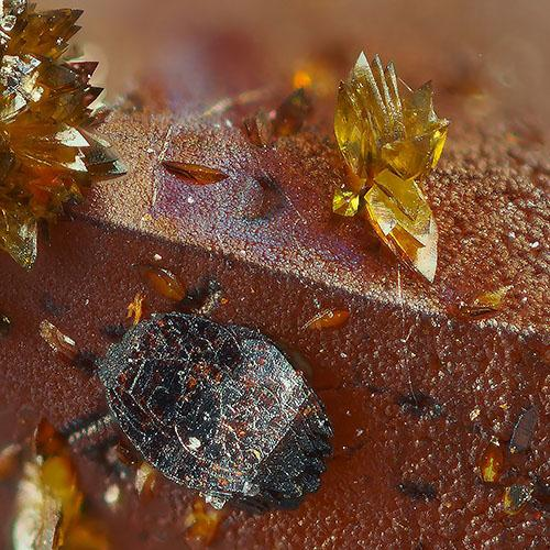 Lepidocrocite & Segnitite