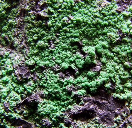 Conichalcite On Chrysocolla