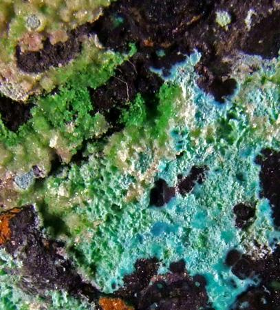 Conichalcite On Chrysocolla Psm Mixite