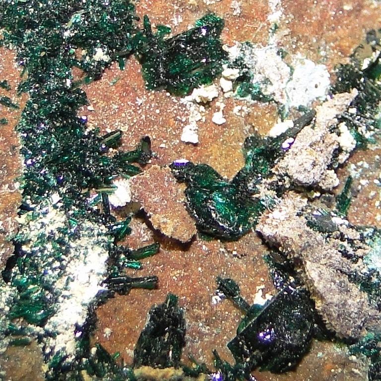 Anatacamite & Paratacamite