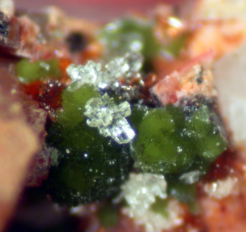 Cobaltlotharmeyerite Cobaltaustinite & Talmessite