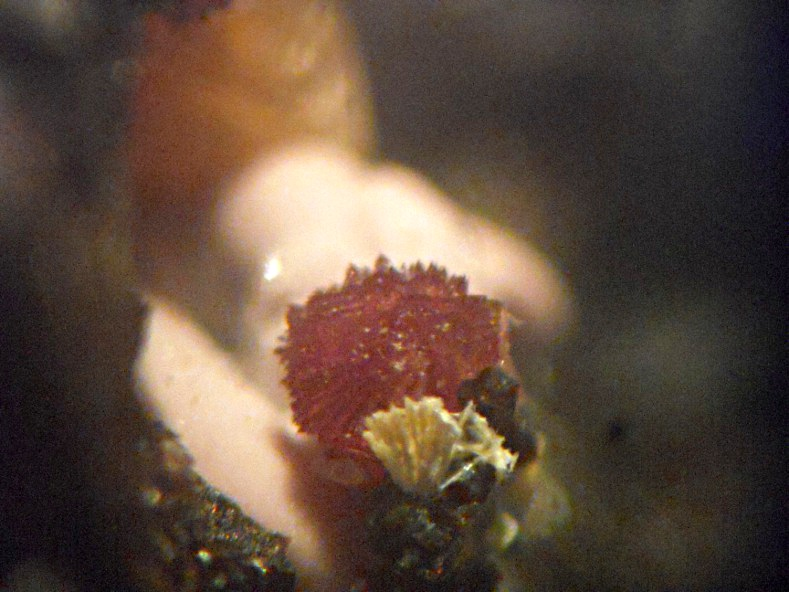 Laueite & Leucophosphite & Bermanite