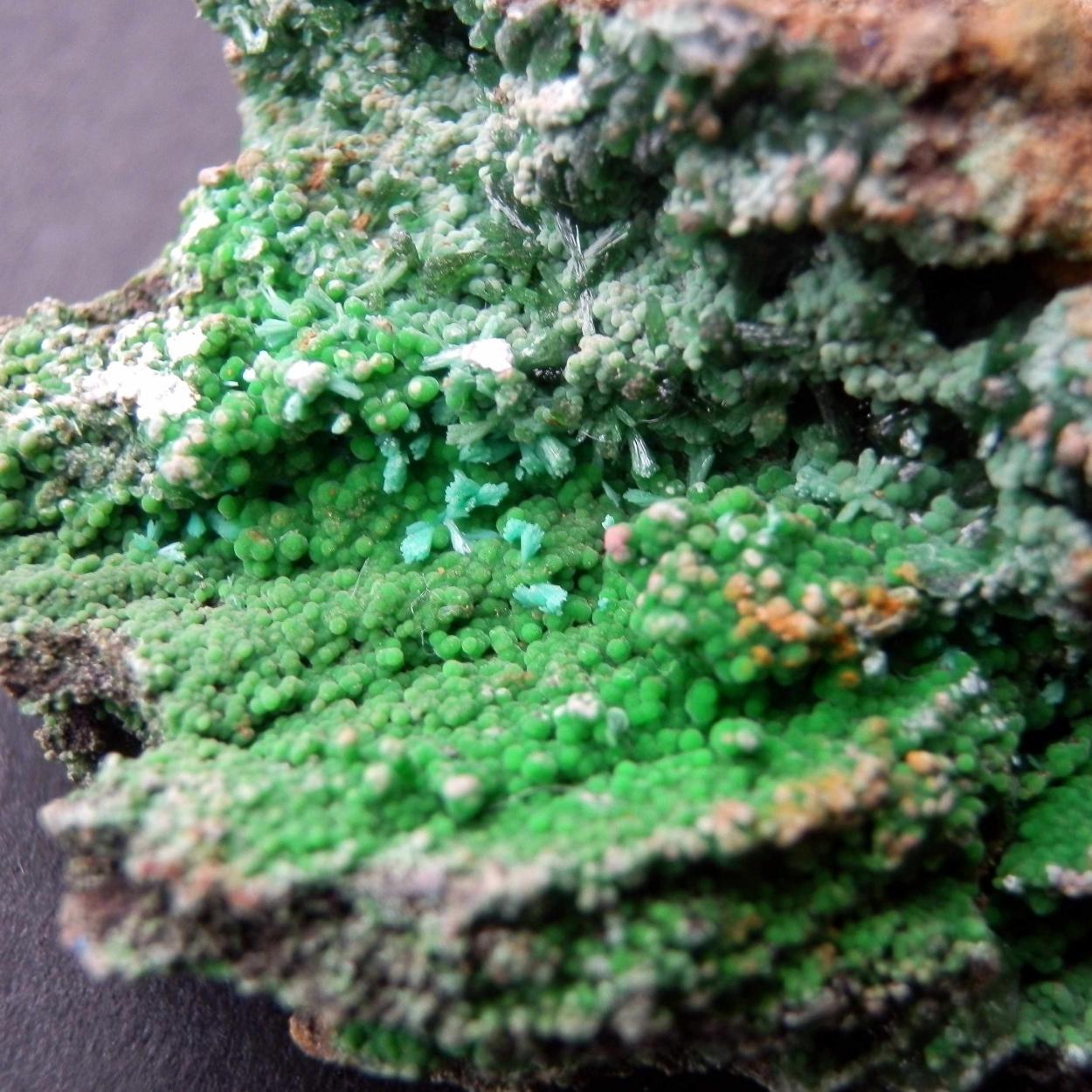 Brochantite & Conichalcite