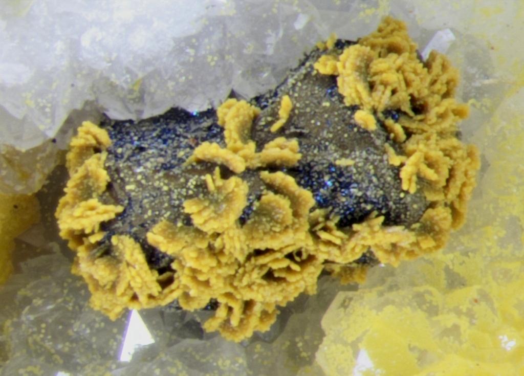 Cervantite Psm Polybasite