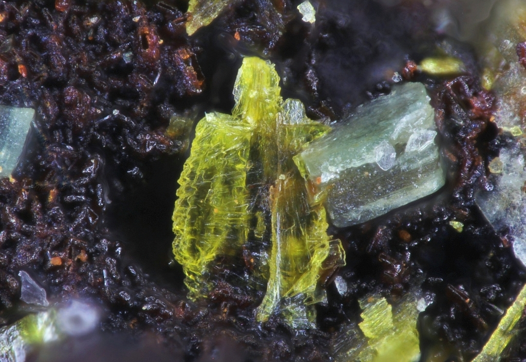 Metavanmeersscheite & Metatorbernite