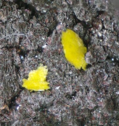 Phosphuranylite & Hematite