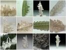 Album: Volcanic Liquorice & Giant Squid - Eating a Salammoniac Mineral Specimen