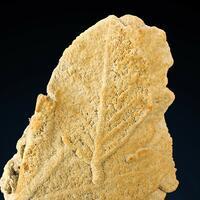 Calcite On Plant