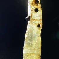 Diaspore With Pyrite