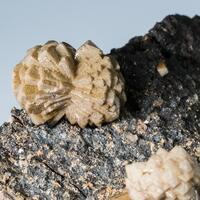 Olmiite & Bultfonteinite