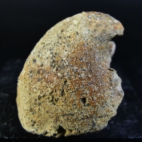 Vanadinite On Fossil Shell