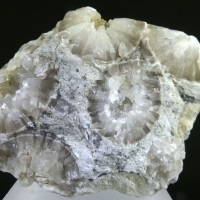 Calcite Psm Fossil Cystoidea