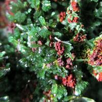 Olivenite Cuprian Adamite Conichalcite Malachite & Azurite