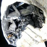 Vivianite Psm Fossil Shell