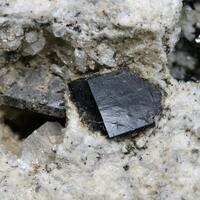 Allanite-(Ce) Nosean Leucite & Fluorapatite