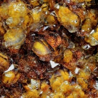 Quartz With Fossil Fungi Inclusions