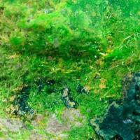 Cuprosklodowskite Soddyite & Vandenbrandeite