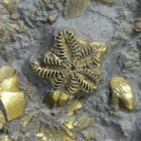 Pyrite Psm Fossil Crinoid & Shell