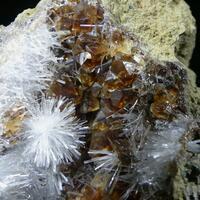 Natrolite & Calcite On Natrolite Psm Fossil Wood