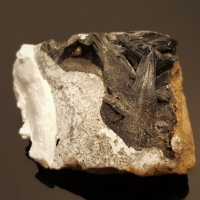 Vivianite In Clam Shell