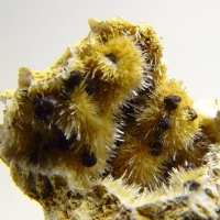 Kutnohorite On Aragonite
