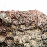 Hematite Psm Coral