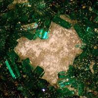 Natrochalcite With Atacamite