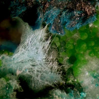 Gilmarite Conichalcite & Manganoan Olivenite