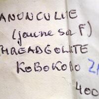 Ranunculite & Threadgoldite