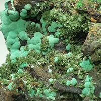 Olivenite Conichalcite & Malachite
