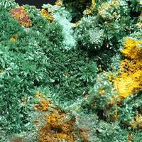 Olivenite Malachite & Azurite