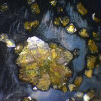 Corkite & Plumbogummite