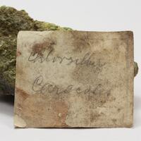 Chlorargyrite With Malachite