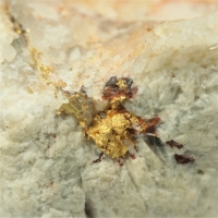 Gold With Limonite