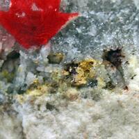Schmitterite Gold Psm Tellurium & Eztlite