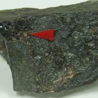 Neotocite