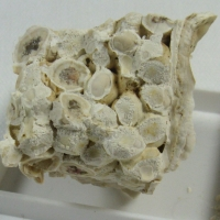 Aragonite Var Pisolite