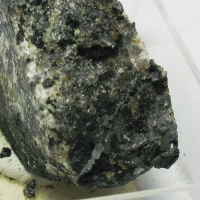 Native Lead