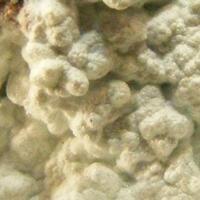 Hydrozincite & Hemimorphite