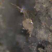 Swinefordite & Metaswitzerite
